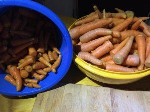 carrots-clean
